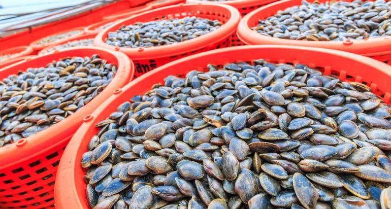 Delights of Korean Seafood